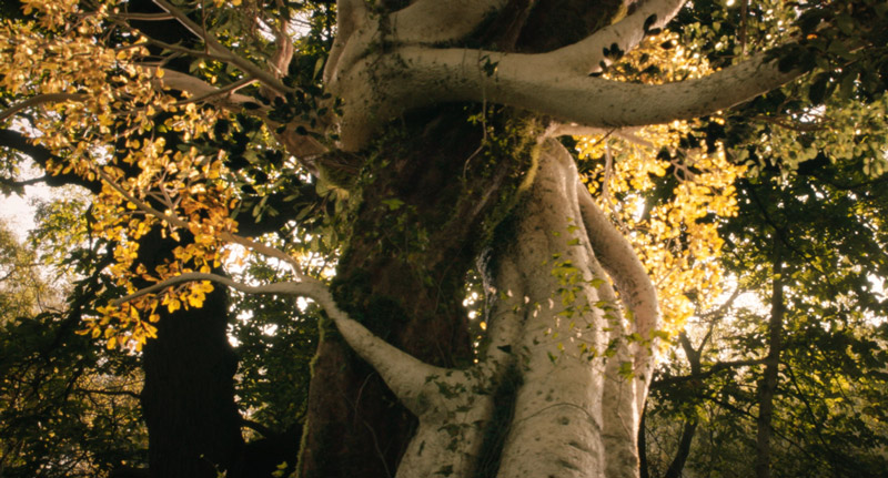 Tolkien Kritik mit Nicholas Hoult irgendwie nerdig
