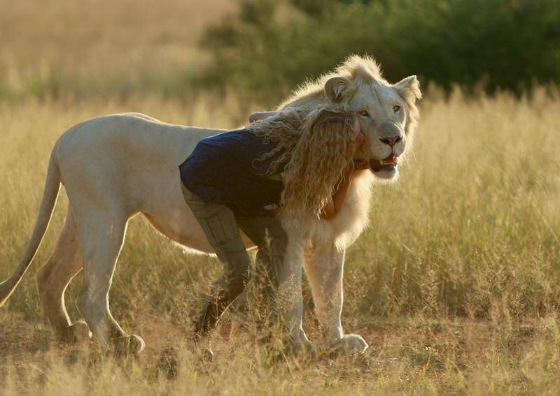 Mia der weiße Löwe Kritik